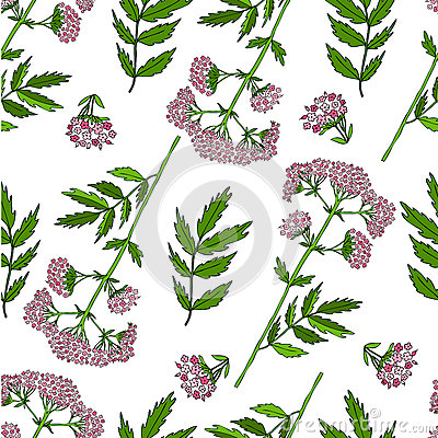Seamless floral pattern, Valeriana officinalis hand drawn vector colorful illustration isolated on white background, for Vector Illustration