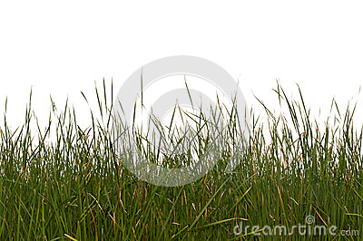 Seamless Isolated Grass