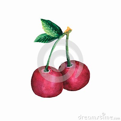 red cherry berry watercolor, juicy element for design logo, brand, package ,wallpaper Stock Photo