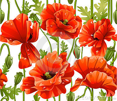 Seamless pattern of red realistic poppies