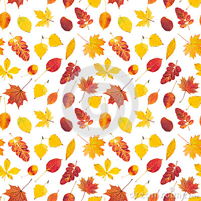 Free Seamless Pattern With Colorful Autumn Leaves Royalty Free Stock Photography - 79041197