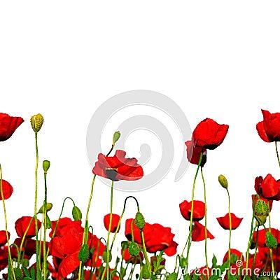 Free Seamless Row Of Poppies Stock Photos - 2395013