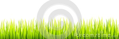Seamless spring grass lines for edging, footer and decorations. Springtime sprouts grows in a daylight Vector Illustration