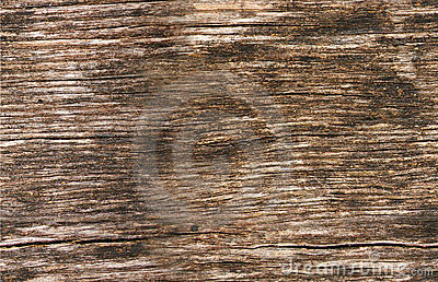 Seamless texture of wood