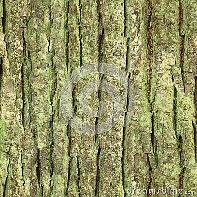 Free Seamless Tree Bark, Rind Texture Royalty Free Stock Photo - 21811925