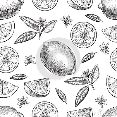 Free Seamless Vector Hand Drawn Lime Or Lemon. Whole , Sliced Pieces Half, Leave Sketch. Fruit Engraved Style Illustration Stock Photo - 76283100