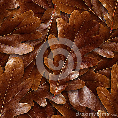 Seamlessly brown oak leafs background.