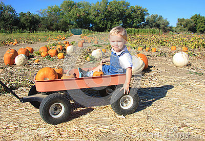 The Search for Pumpkins