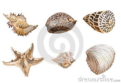 Seas shells watercolor