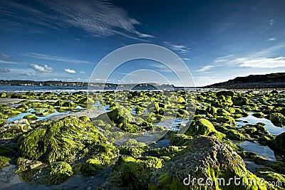 Seascape Brittany