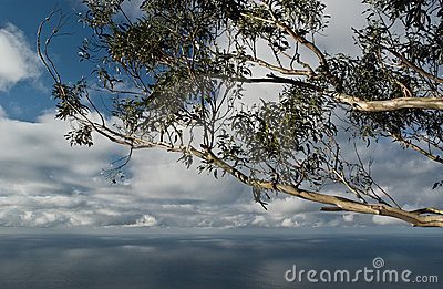 Seascape with eucalyptus tree