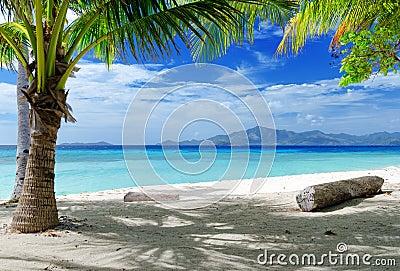 Green tree on white sand beach.