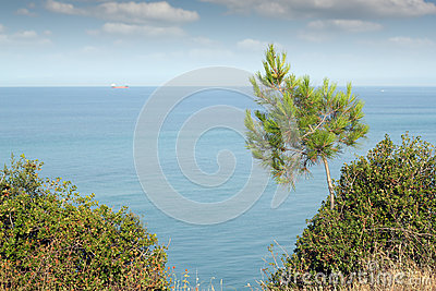 Seascape with pine tree