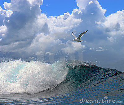 seagulls waves Gallery