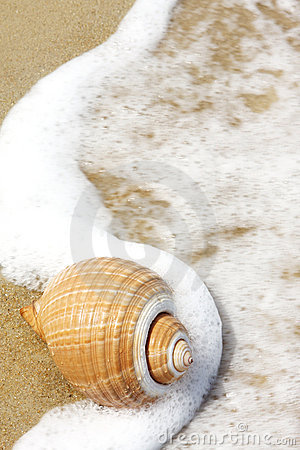 Free Seashell Royalty Free Stock Images - 3694629
