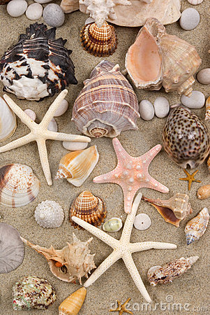 Free Seashell Background Royalty Free Stock Photos - 4157318