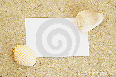 Seashell background and card