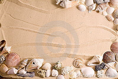 seashell on sand beach frame royalty free stock image image 14833636