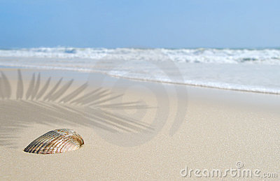 Seashell on Beach Under Palm