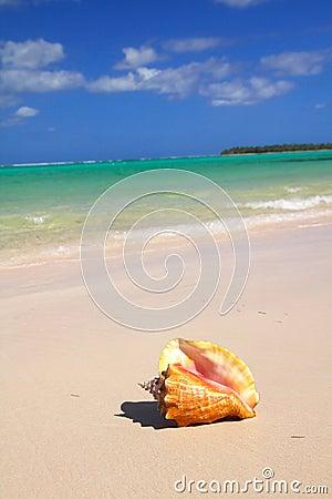 Seashell on caribbean sea