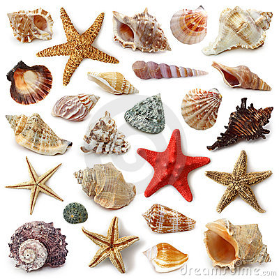 Free Seashell Collection Royalty Free Stock Photo - 14541685