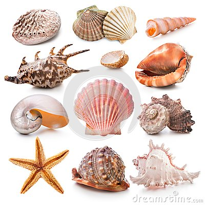 Free Seashell Collection Stock Photography - 26860642
