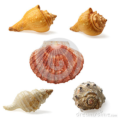 Free Seashell Collection Royalty Free Stock Image - 36380756
