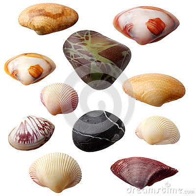 Free Seashell Collection Stock Image - 36380841