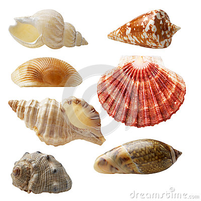 Free Seashell Collection Royalty Free Stock Photography - 36380847