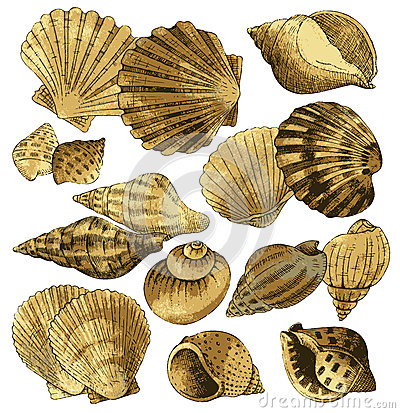 Free Seashell Collection Stock Images - 40666254