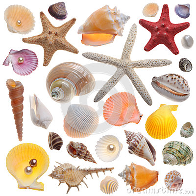 Free Seashell Collection Isolated Royalty Free Stock Photos - 28954068