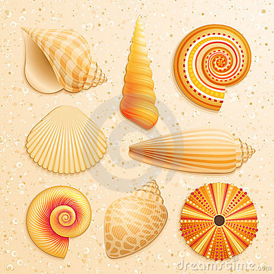 Free Seashell Collection On Sand Background Royalty Free Stock Images - 20770329