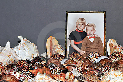 Seashell collection and photo