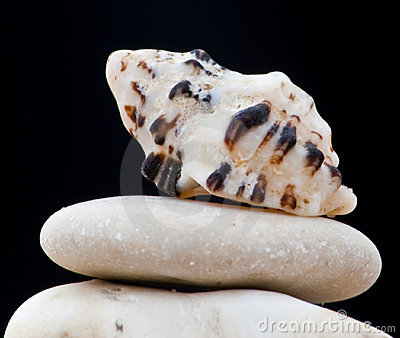 Seashell del Mar Rojo