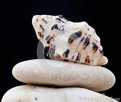 Seashell des Roten Meers