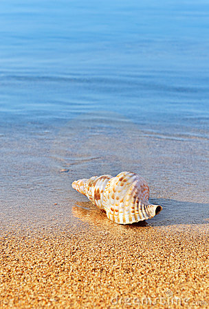 Seashell en la playa serena