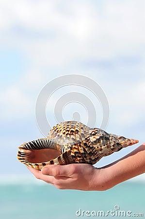 Seashell in hand