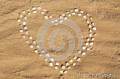 Seashell heart