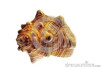Seashell helix isolated