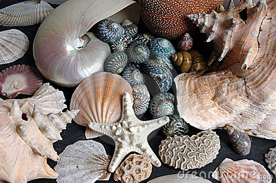 Seashell Jumble