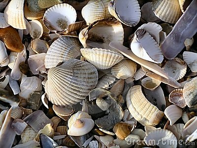 Seashell Jumble I (Color)