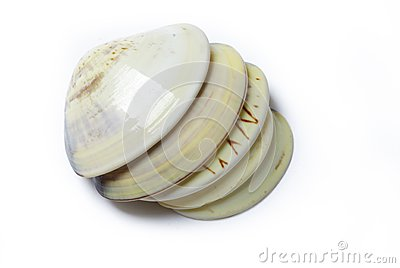 Seashell ocean