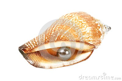 Seashell with pearl
