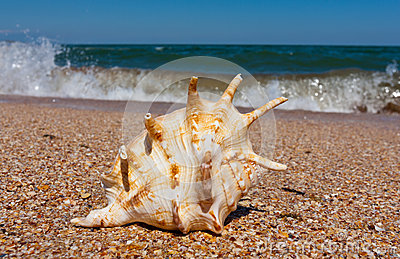 Seashell on sea