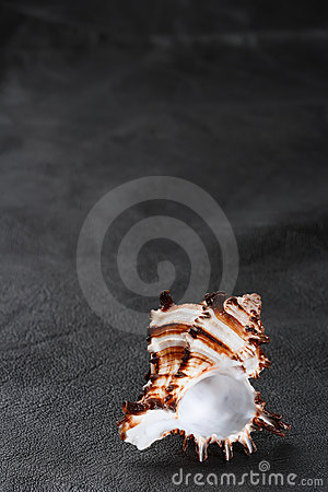 Free Seashell Sea Shell On Old Black Leather Background Stock Photos - 6289543