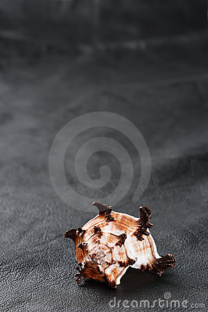 Free Seashell Sea Shell On Old Black Leather Background Royalty Free Stock Photography - 6289547
