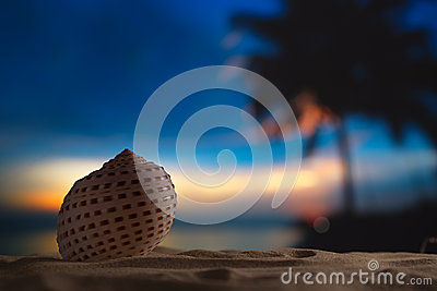 Seashell in the sea , sunrise, dark light