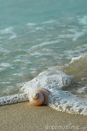 Seashell on the Shore