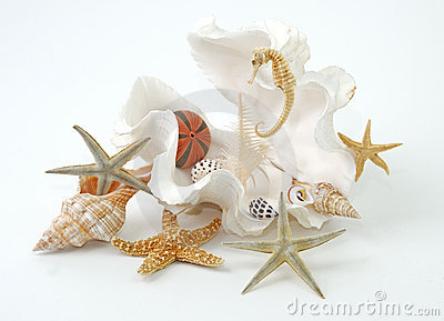 Seashell spa
