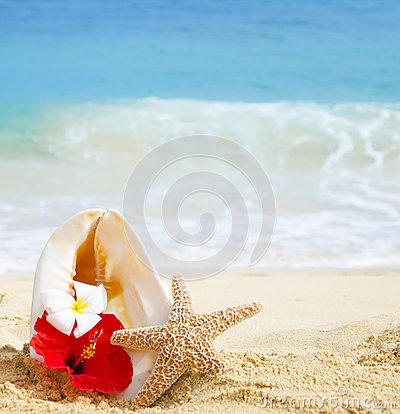 Seashell and starfish with tropical flowers on sandy beach